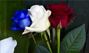 Le tre rose coi colori di Francia. In ricordo della vile strage di Parigi del 13 Novembre 2015 e ad imperitura memoria di tutte le inconsapevoli vittime.